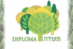 """Diploma """"Albero alla Memoria"""""""
