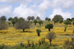 Ben-Shemen-Passover-2015-Yossi-Zamir-photo