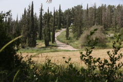 Spring-in-the-Ben-Shemen-Forest-2015-Yossi-Zamir-photo-2