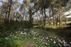 Spring-in-the-Ben-Shemen-Forest-2015-Yossi-Zamir-photo