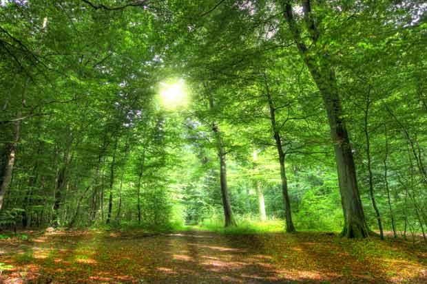 European-Forest-Week