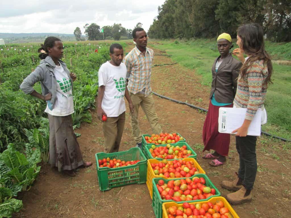 Haramaya Harvest