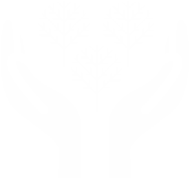 Pianta un albero in Israele-image