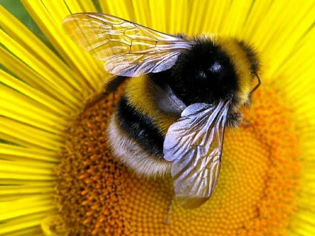 api uccise da pesticidi