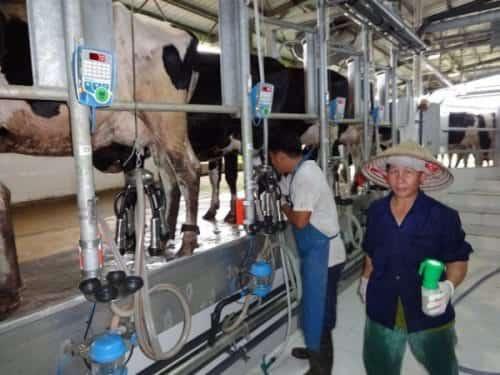 KKL   fattoria-caseificio Vietnam