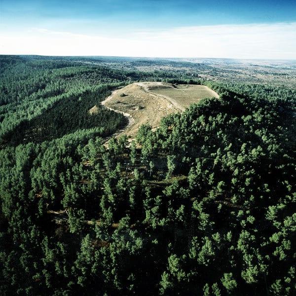 Giardini boschi e foreste kkl italia onlus for Progetti di piantagione