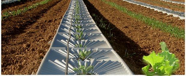 Azienda israeliana tal ya sistema di irrigazione con la for Sistema irrigazione a goccia