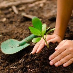 pianta-un-albero_img2